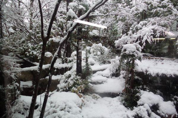 事務所の庭も雪が積もりました。